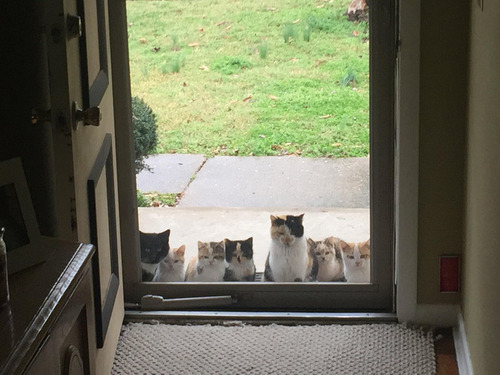 野良猫が家族を連れてきた01