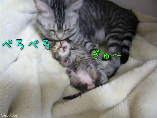 夢見る子猫をぎゅーっと抱きしめるママ猫00