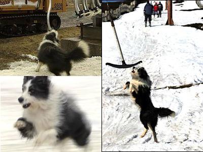 スキーのリフトにぶら下がる犬TOP