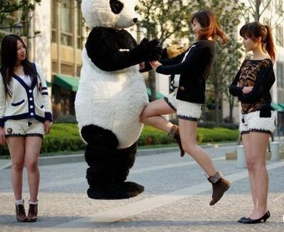 パンダのホットパンツ06