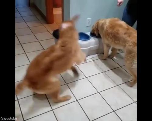 ご飯を待つとき同じ犬種でもこんなに違う02