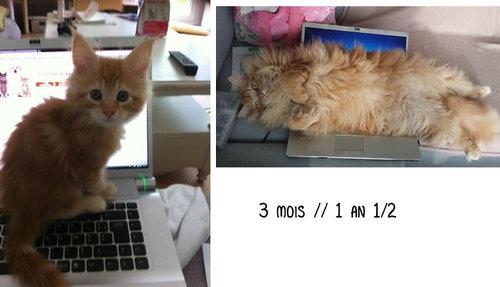 猫とバケツ08