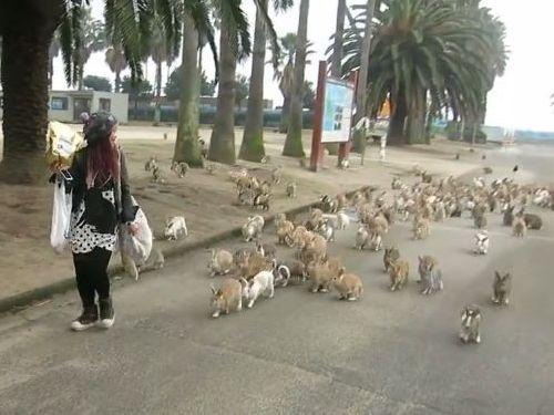 ウサギ100匹に囲まれたら01
