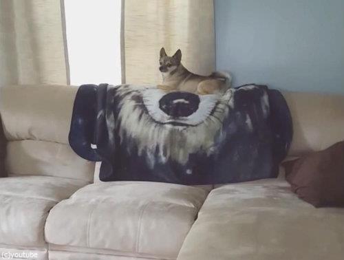 ソファの上の犬が消える02