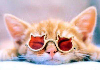 03メガネやサングラスをかける動物たち