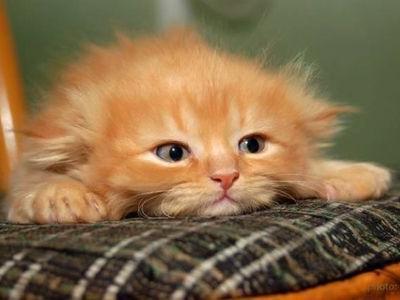 子猫に舞い降りた奇跡