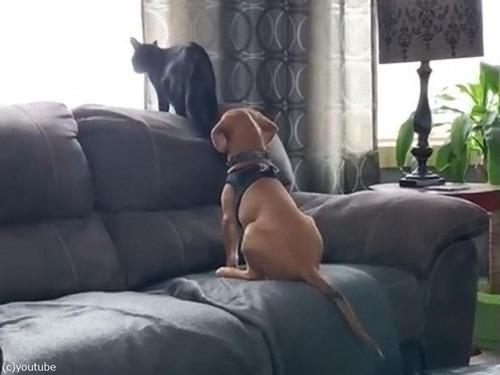 肩を組む犬と猫01