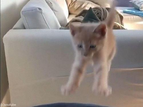 子猫の失敗ジャンプ02