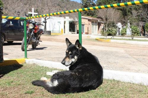 忠犬キャピタン06