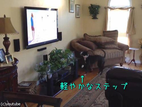 テレビを見て興奮する犬00