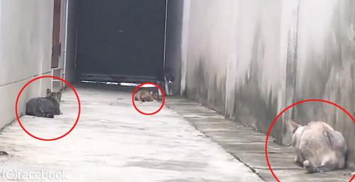 この猫の躍動感よ01