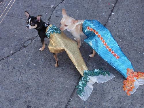人魚パレード06