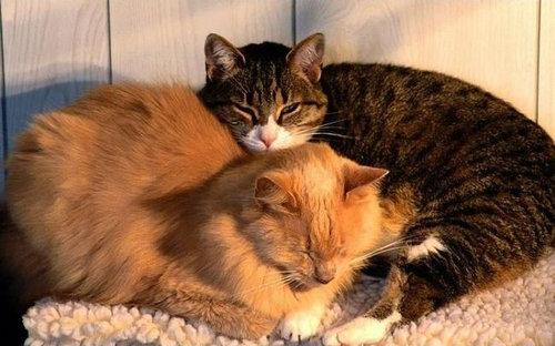 猫を飼った時の理想と現実11