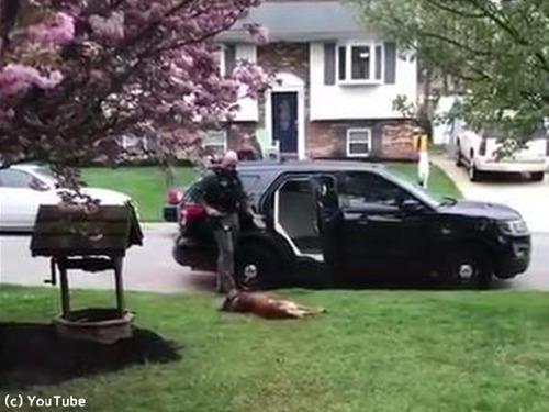 警察犬「働きたくないでござる」01