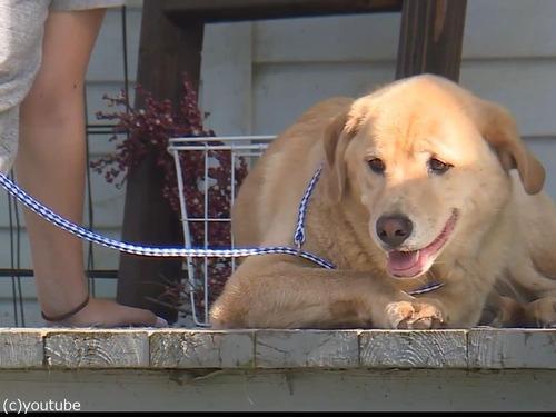行方不明の犬、100km離れた前の家にいた01