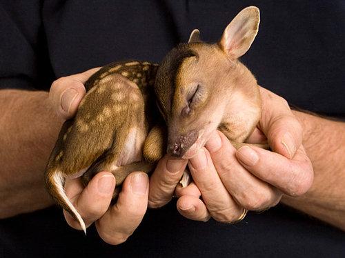 手乗りの動物赤ちゃん09