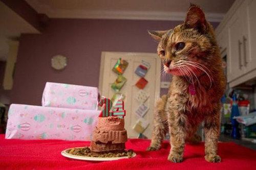 最高齢の猫02