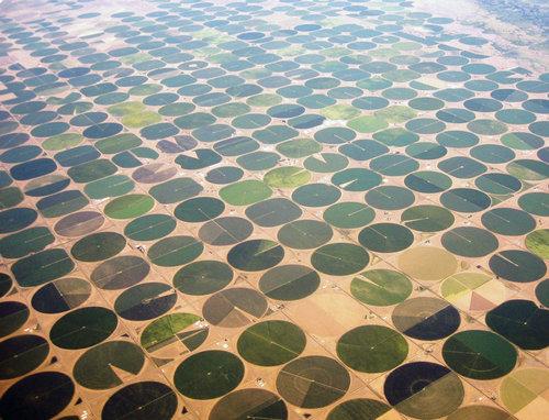 サウジアラビアの農場03