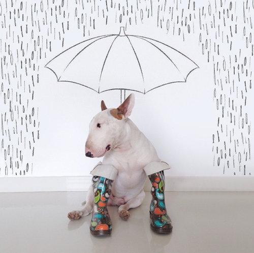 愛犬と10倍楽しむ方法02