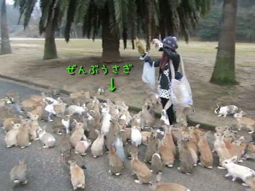 ウサギ100匹に囲まれたら00
