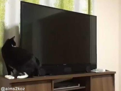胴体が長すぎる猫01