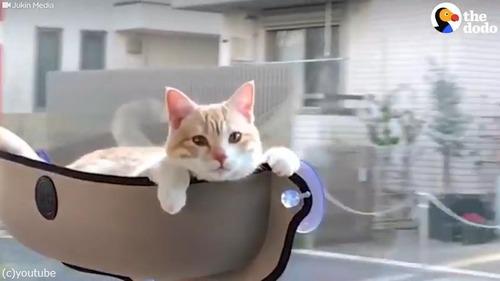 ドライブ猫02
