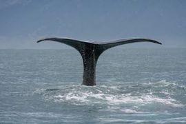 02-クジラ