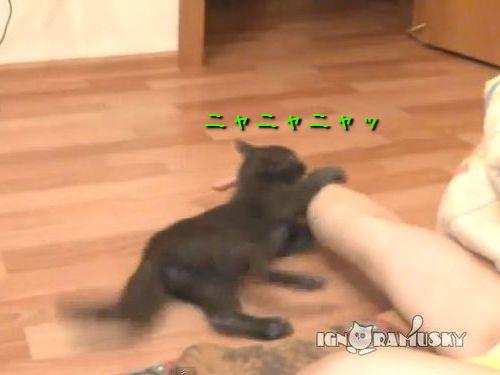投げられる猫00