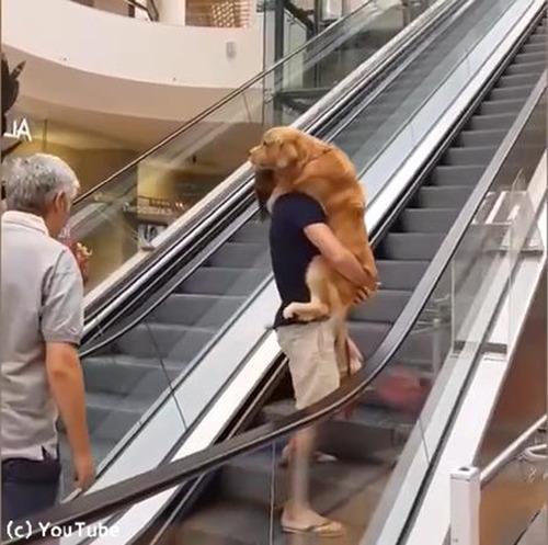 エスカレーターが怖い犬04
