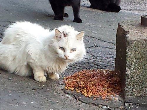 誰ひとり寄せ付けなかった野良猫03