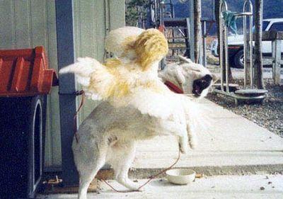犬がニワトリと本気で戦う06