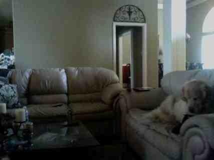 ソファで寝る犬01