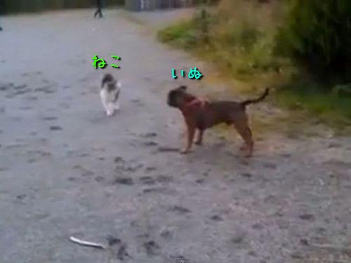 犬と猫、静と動の対決00