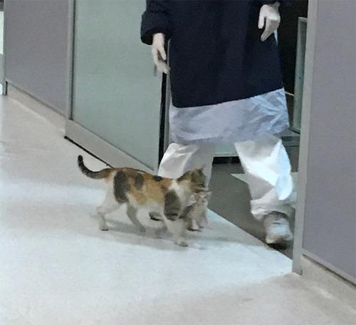 病気の子猫をママ猫が病院に連れてきた02