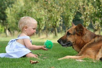 赤ちゃんとペット14