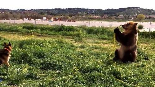 水遊びを楽しむ熊と犬02