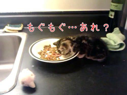ご飯を食べる子猫…眠気に負ける00