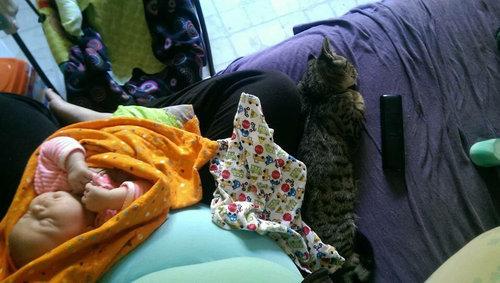 妊娠中に拾った猫が、今は赤ちゃんと親友に09