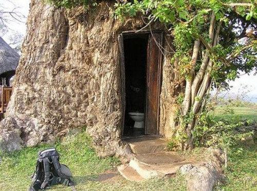 バオバブの木09
