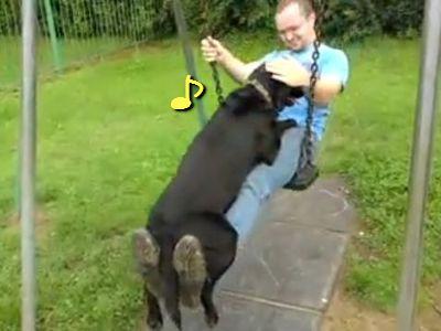 ヒザの上が好きな犬 ブランコに乗る男性のヒザに、どっしりとまたがる黒いラブラドール・レトリ...