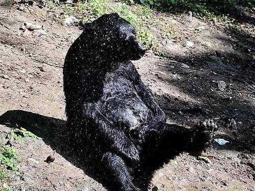 クマさんの水浴び02
