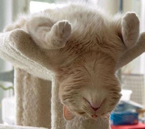 猫の寝方18