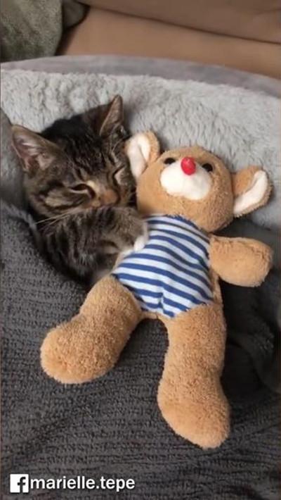 猫のおやすみ動画がかわいすぎ04