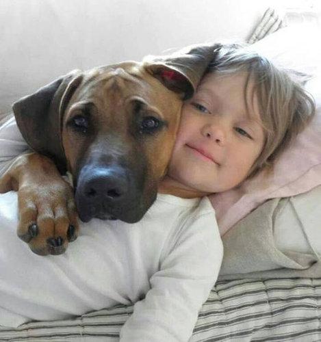 犬を飼うべき理由23