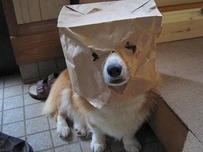 酷い犬のコスプレ10