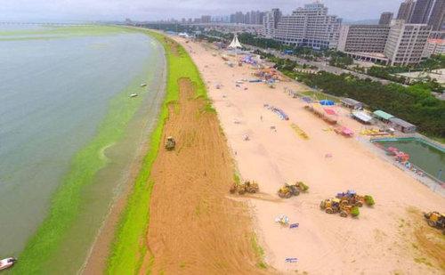 中国の緑の海12