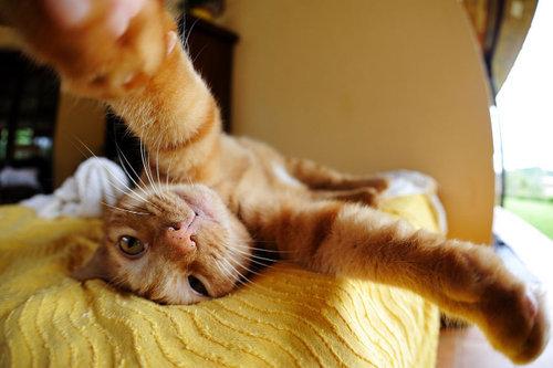 猫の自撮り11