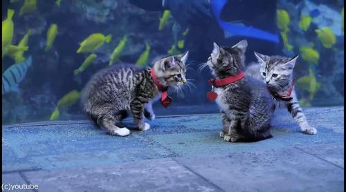 ジョージア水族館を訪れた子猫たち05