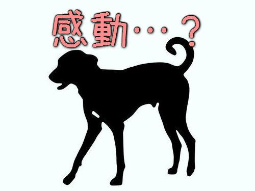 世界で最も感動の薄い犬00