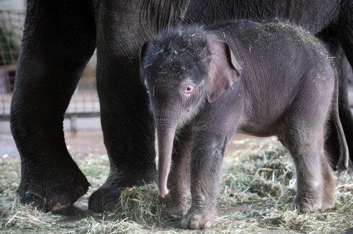 動物の赤ちゃん07